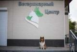Ветеринарные клиники Комсомольска-на-Амуре: адреса, услуги,