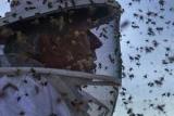 Видел массовое вымирание из всех насекомых в мире